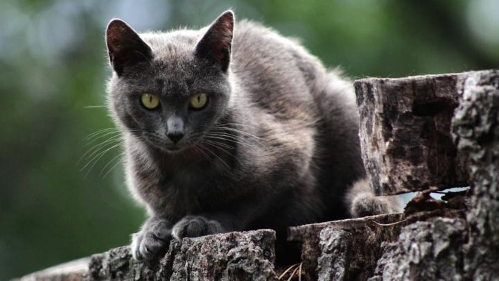 Cilve Dolu Hayatlar – Kedilerin Acı-TatlıTarihi