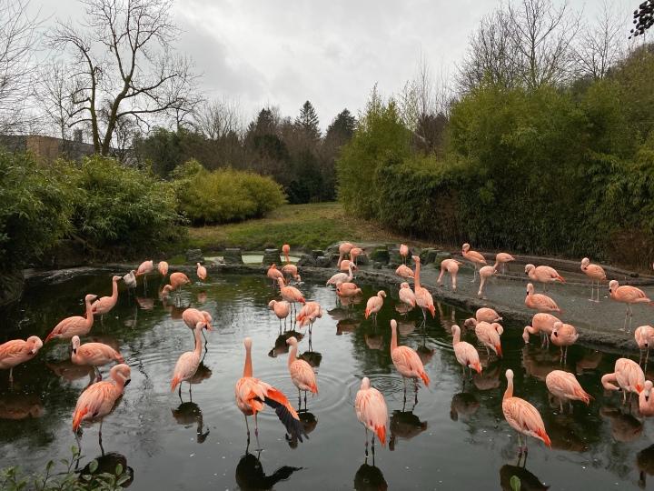 Binbir Rengin İçinde – Zürih HayvanatBahçesi