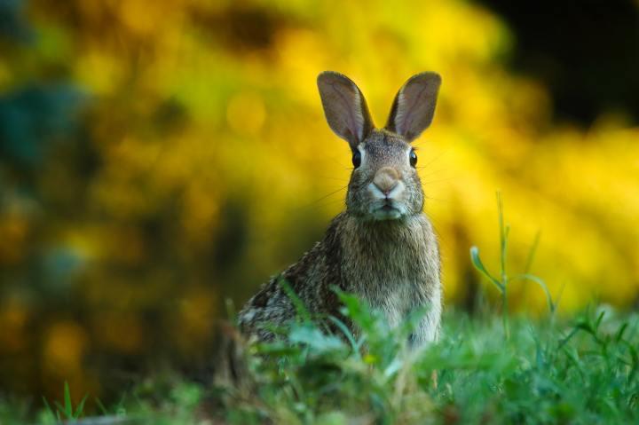 Tavşanların Yaratılış Destanı – Watership Tepesi'nden BirAlıntı